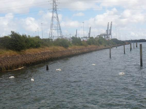 Water with sea birds and pylons in the distance